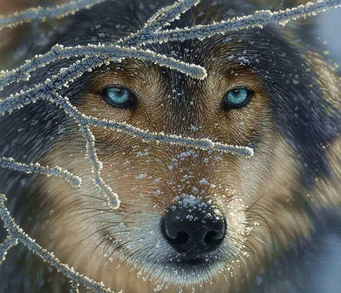 Der Wolf meiner Leeren: Wie kann man mit Verlusten umgehen?