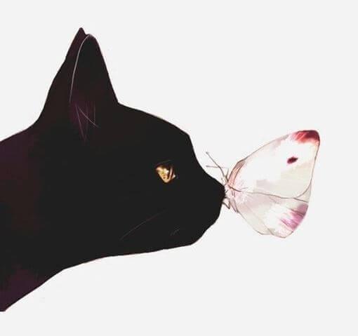 Katzenschmetterling
