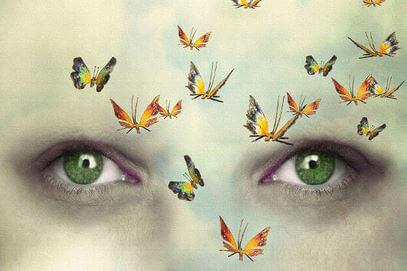 Schmetterlinge vor Augen