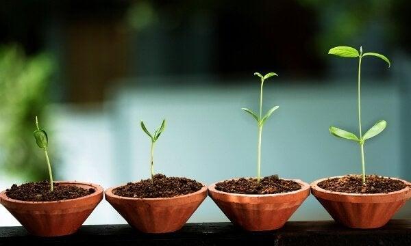 Pflanzen wachsen - so wie wir es in der integrale Psychologie sollen.