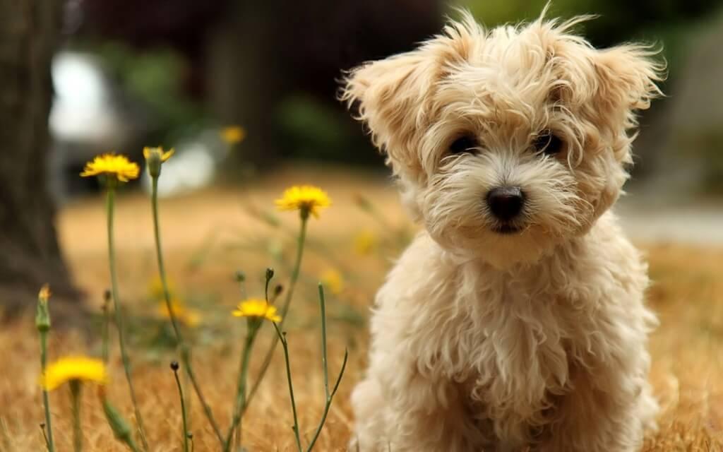 Haustiere sterben nicht, sie ruhen nur inmitten deines Herzens
