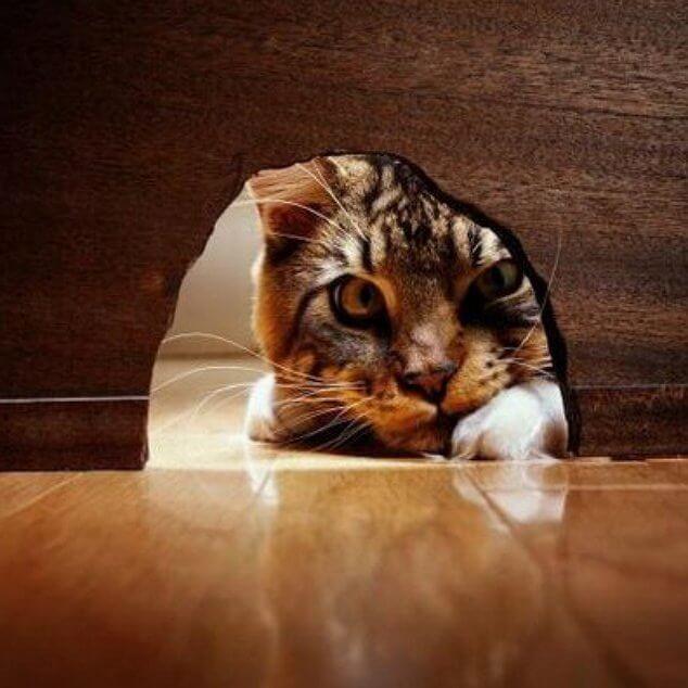 Ohne neugier lernt man nichts gedankenwelt - Como evitar los ratones ...