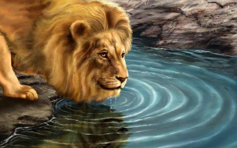 Die Geschichte vom Löwen und seinem Spiegelbild