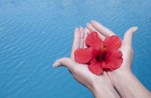 Dankbarkeit – die geheime Zutat