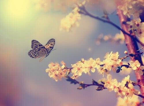 Schmetterling-fliegt-ueber-Blumen