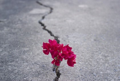 Blume im Riss