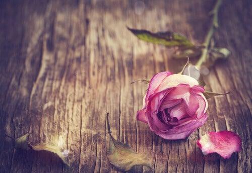 Rosane Rose auf Holztisch