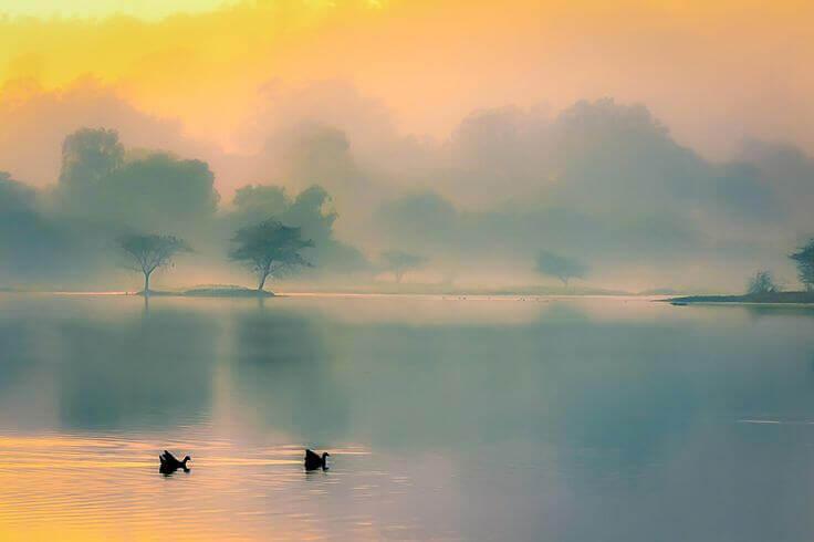 Enten-auf-See-im-Nebel