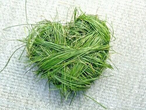 Herz aus Gras