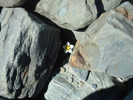 Bluemchen-zwischen-Steinen ist einen Moment an der Sonne