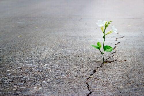 Blume wächst durch einen Riss im Asphalt