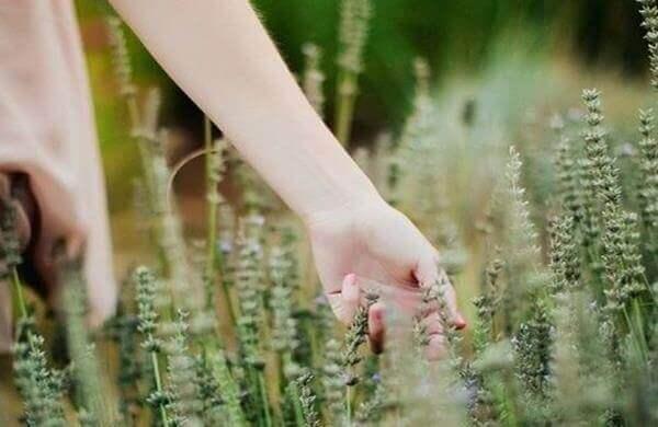 Hand streif durch die Ähren der Gräser