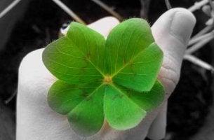 das Glück regelrecht anziehen - vierblättriges Kleeblatt zwischen den Fingern