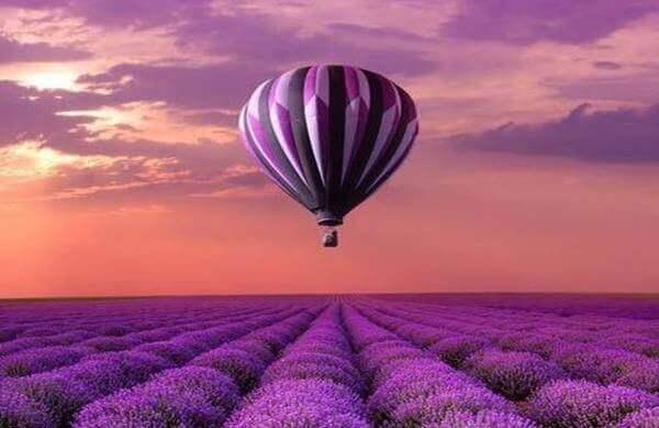 Purpurner Ballon über Lavendelfeld