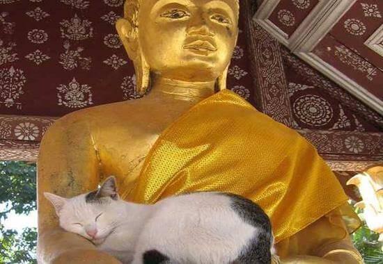 Katze schläft in Buddhas Arm