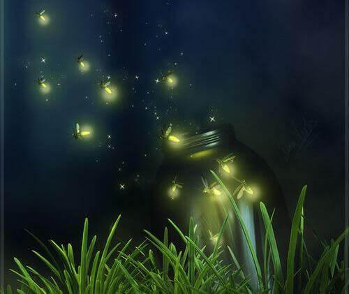 Glüchwürmchen in der Nacht