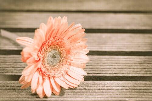 Blume auf Holztisch