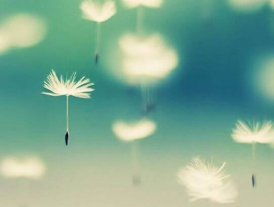 Pusteblumen in der Luft