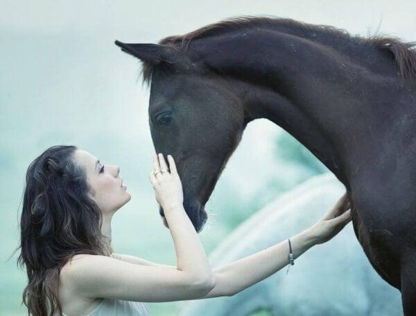 Frau streicht einem Pferd über den Nasenrücken
