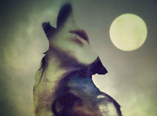 Profil eines Wolfs aus einem Menschen geschnitten