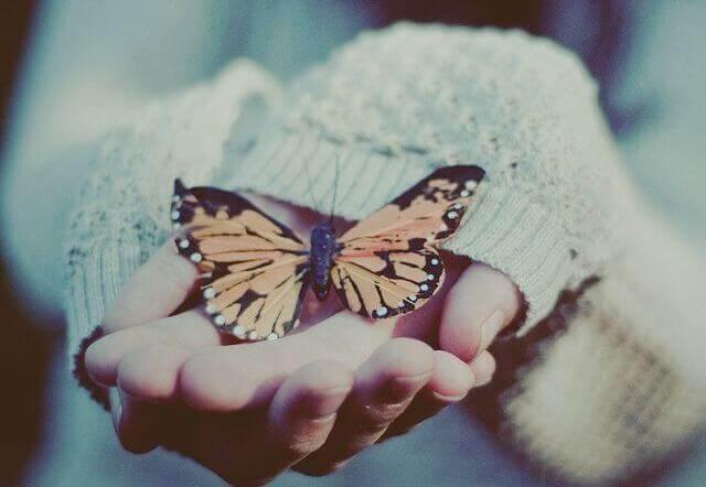 Schmetterling sitzt auf Hand