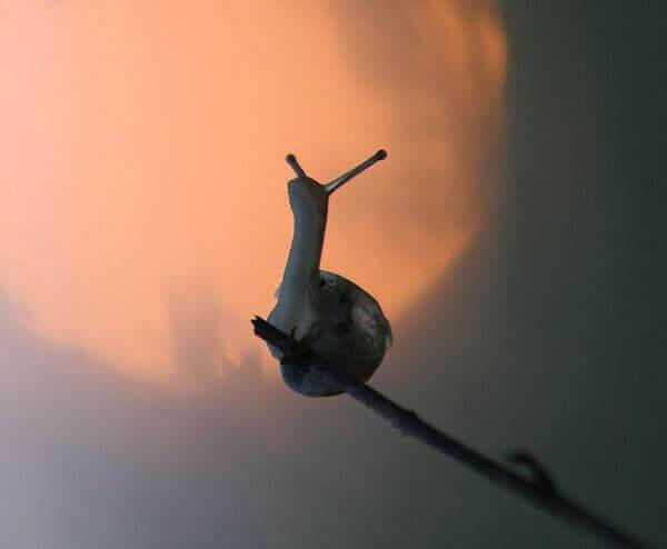 Schnecke auf dünnem Zweig