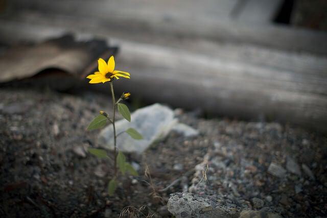 Blume sucht sich einen Weg durch Trümmer