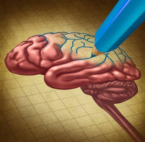 neuroplastizitaet