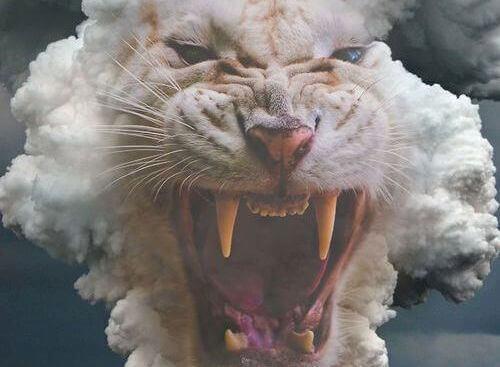 weisser-tiger