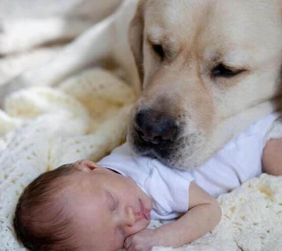 Hund-mit-Baby