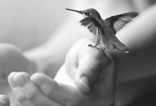 kleiner-vogel
