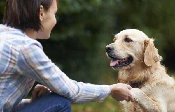 Wie erkennen Hunde Gesichter?