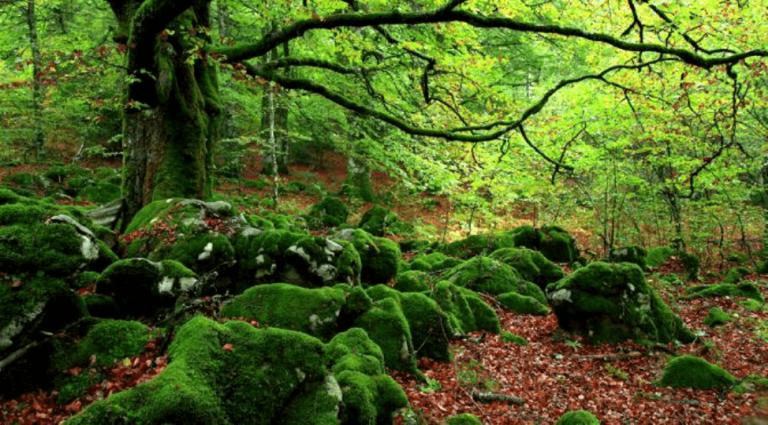 Waldbaden: Mittel gegen Stress