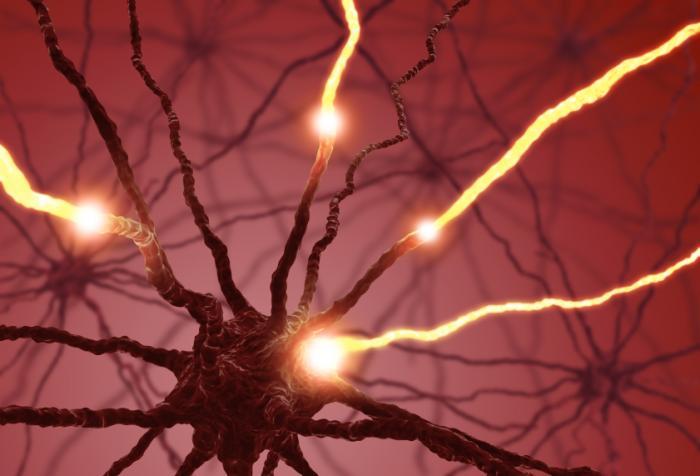 Freie Nervenenden ermöglichen es, dass wir Schmerz empfinden.