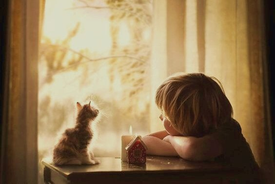 Junge und Katze schauen zum Fenster heraus