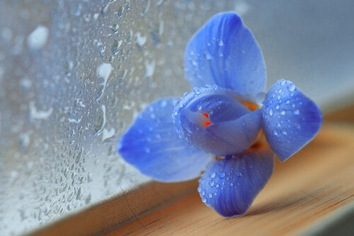 Blüte vor beschlagener Fensterscheibe repräsentiert Trauer