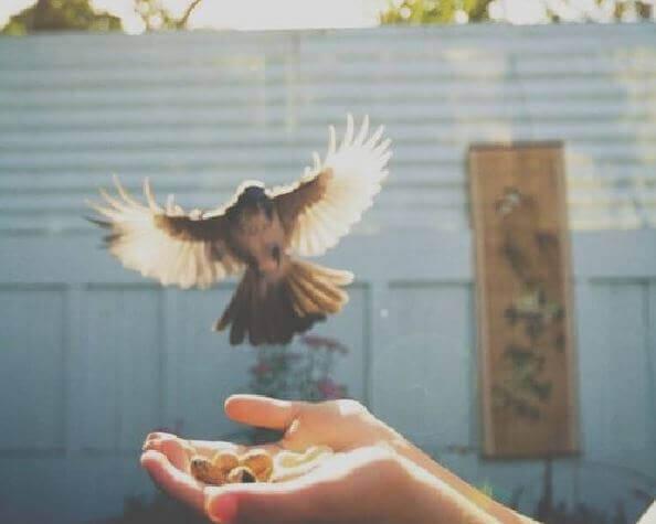 Mensch bietet einem Vogel Futter an