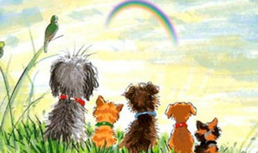 Hunde schauen einen Regenbogen an
