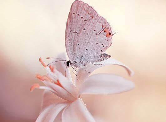 Schmetterling sitzt auf weißer Blume
