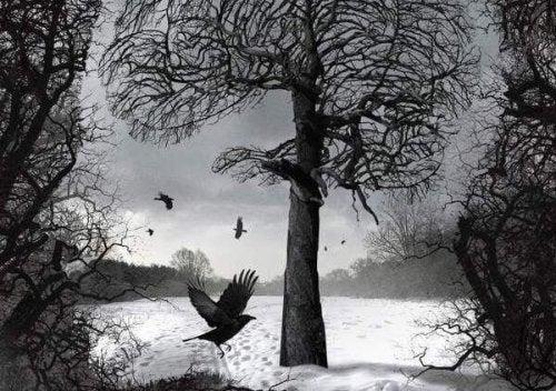 Schneebedecktes Feld in Grautönen