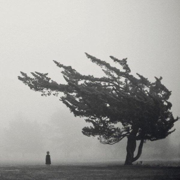 Kind steht unter einem vom Wind gezeichneten Baum