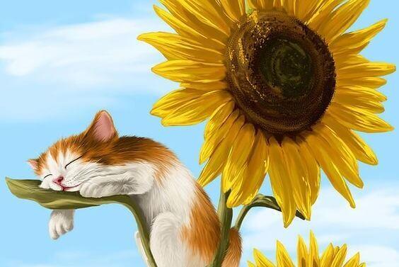 Katze schläft auf Sonnenblume