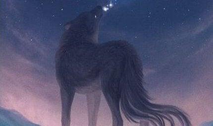Gefühle herauslassen - Wolf heult Sterne an