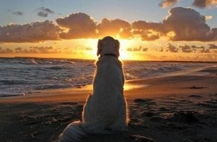 Von Hunden lernen - Hund vor Sonnenaufgang