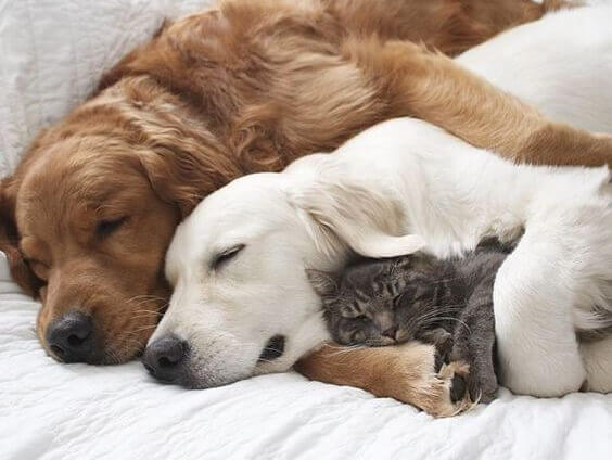 Hunde kuscheln mit Katze