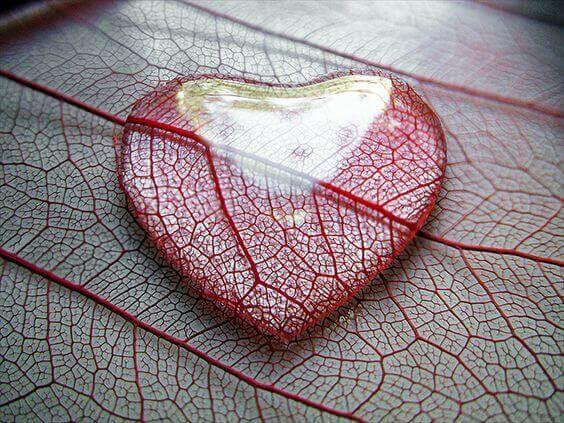 Wassertropfen in Herzform auf einem Blatt