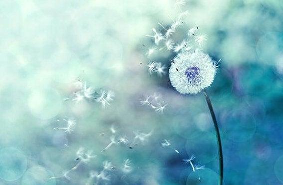 Samen einer Pusteblume im Wind
