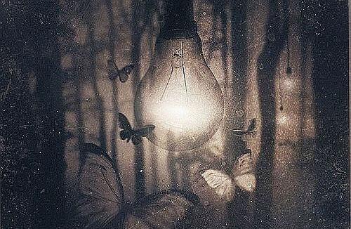 Glühbirne umflogen von Schmetterlingen