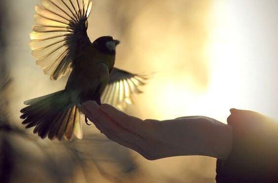 Vogel sitzt auf Hand und breitet die Flügel aus
