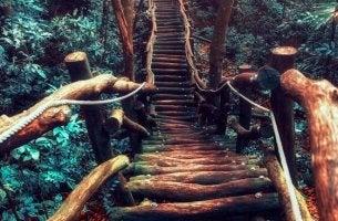 Und wo führt dein eigener Weg hin?